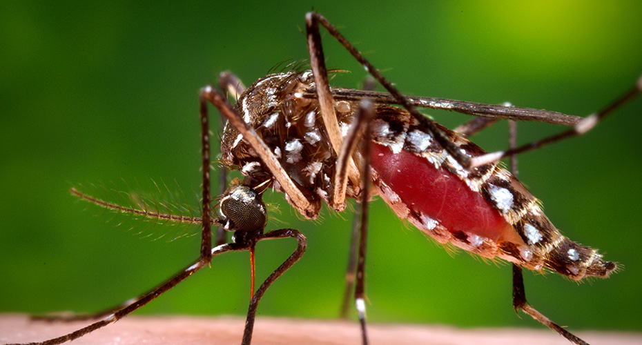 Things to remeber about mosquitoes